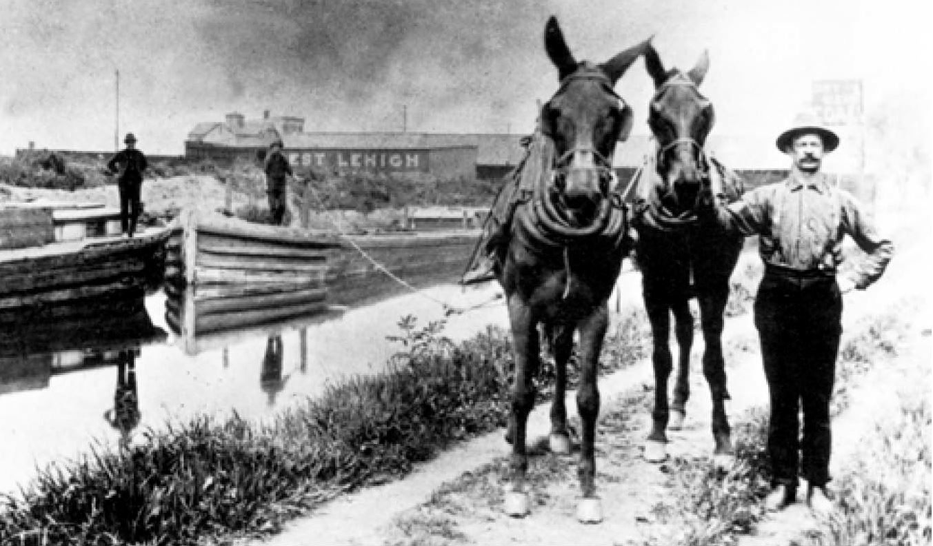 A man stands with horses by the Morris Canal